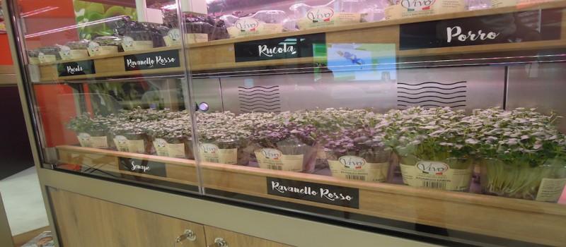 Microgreen, cresce in una serra-vetrina in store anche da Eataly World